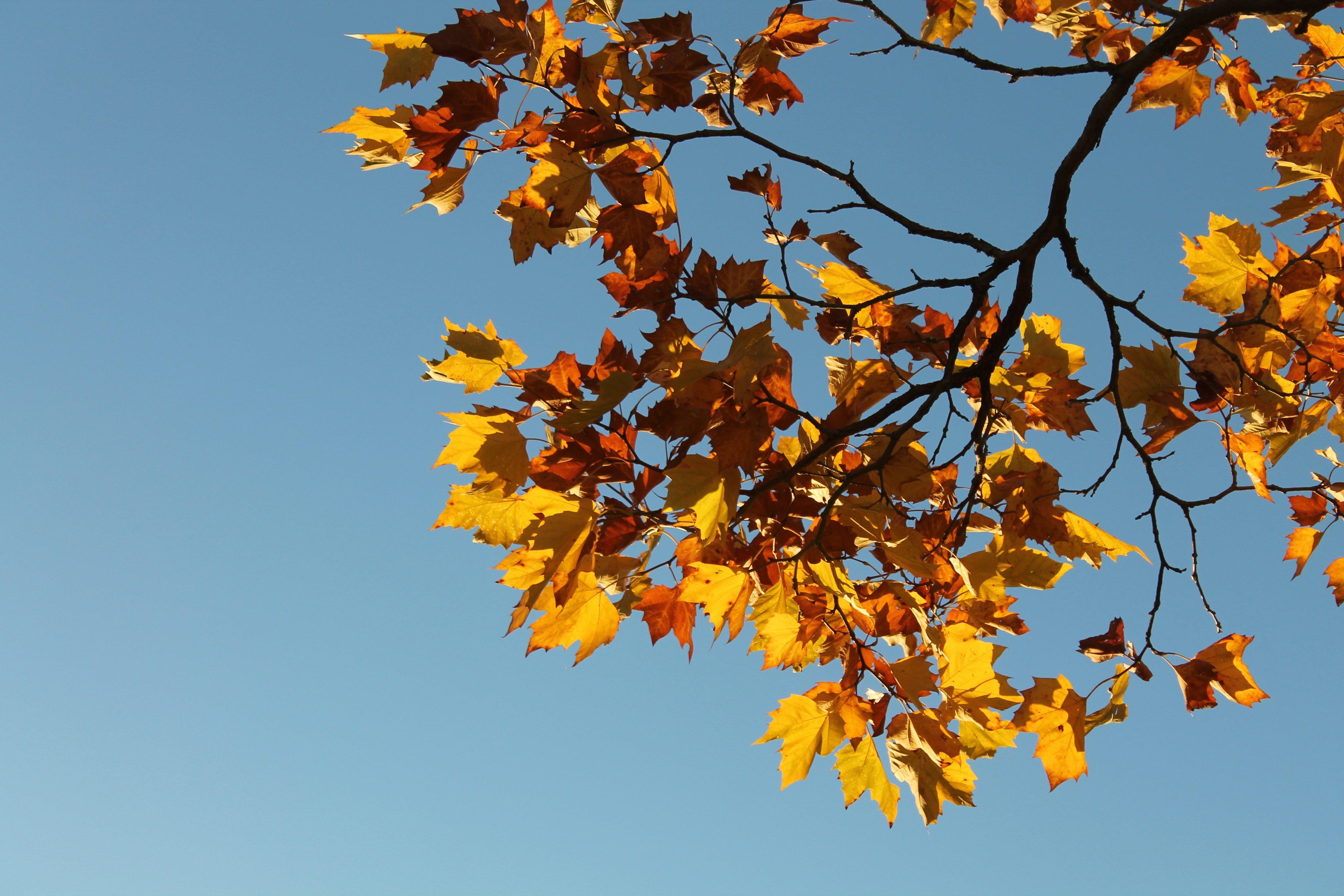Höstens kvällskurser på Berghs